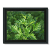 Close Picture Of Parsley Framed Canvas 16X12 Wall Decor