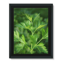 Close Picture Of Parsley Framed Canvas 18X24 Wall Decor