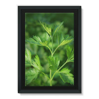 Close Picture Of Parsley Framed Canvas 24X36 Wall Decor
