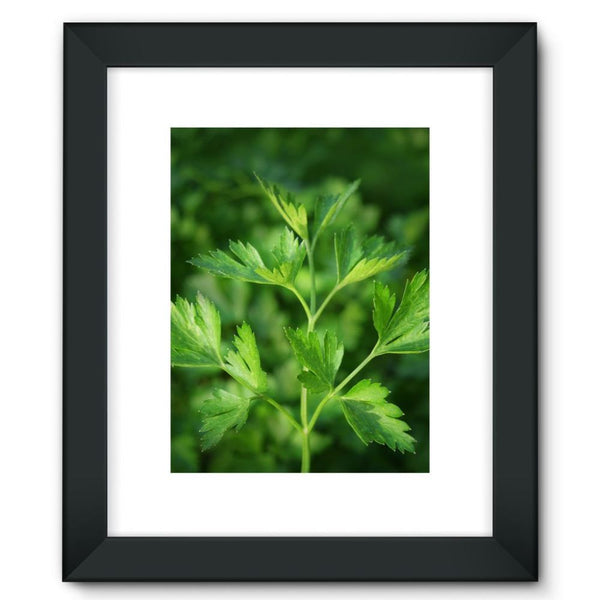 Close Picture Of Parsley Framed Fine Art Print 12X16 / Black Wall Decor