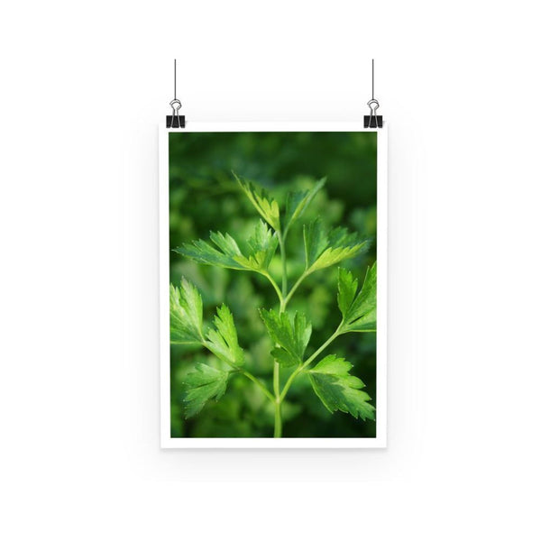 Close Picture Of Parsley Poster A3 Wall Decor
