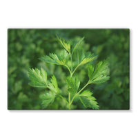 Close Picture Of Parsley Stretched Canvas 30X20 Wall Decor