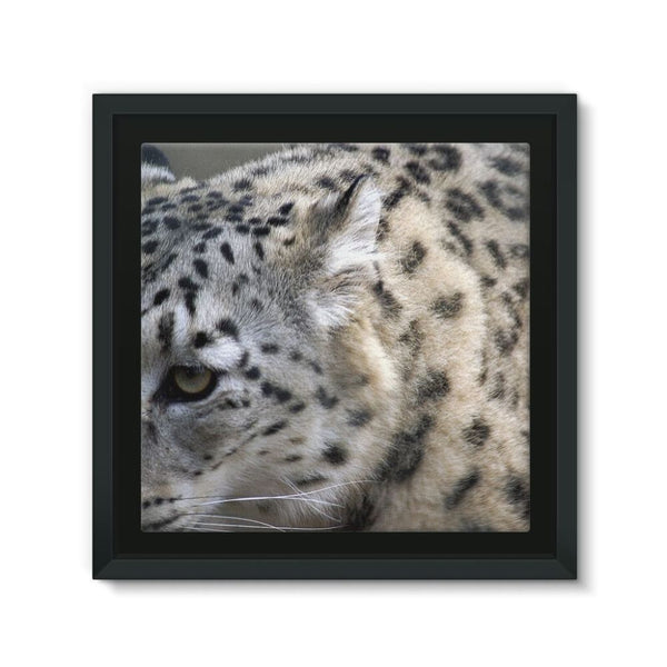 Closeup Of A Snow Leopard Framed Eco-Canvas 10X10 Wall Decor
