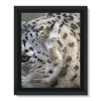 Closeup Of A Snow Leopard Framed Eco-Canvas 11X14 Wall Decor