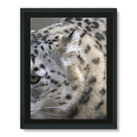 Closeup Of A Snow Leopard Framed Eco-Canvas 18X24 Wall Decor