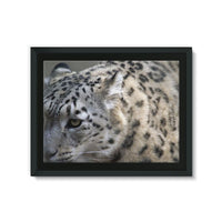 Closeup Of A Snow Leopard Framed Eco-Canvas 24X18 Wall Decor