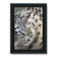 Closeup Of A Snow Leopard Framed Eco-Canvas 24X36 Wall Decor