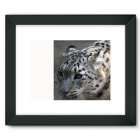 Closeup Of A Snow Leopard Framed Fine Art Print 16X12 / Black Wall Decor