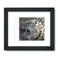 Closeup Of A Snow Leopard Framed Fine Art Print 32X24 / Black Wall Decor