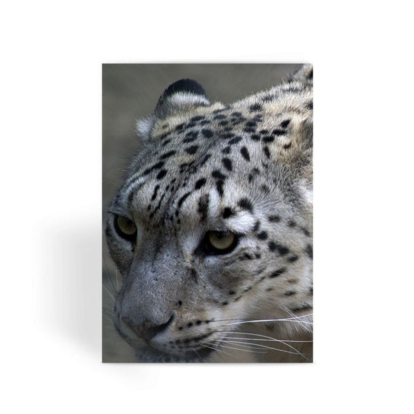 Closeup Of A Snow Leopard Greeting Card 1 Prints