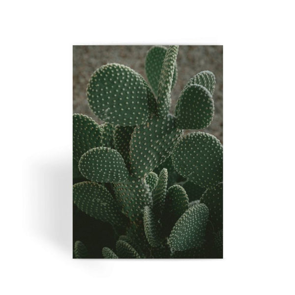 Closeup Of Cactus Greeting Card 1 Prints