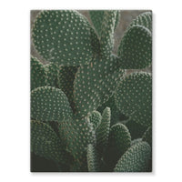 Closeup Of Cactus Stretched Canvas 24X32 Wall Decor
