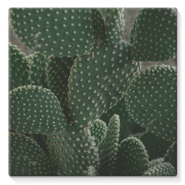 Closeup Of Cactus Stretched Eco-Canvas 10X10 Wall Decor