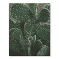 Closeup Of Cactus Stretched Eco-Canvas 11X14 Wall Decor