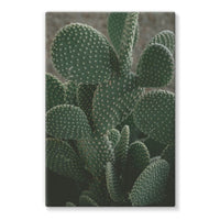 Closeup Of Cactus Stretched Eco-Canvas 24X36 Wall Decor