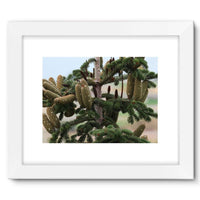 Closeup Picture A Pine Tree Framed Fine Art Print 16X12 / White Wall Decor
