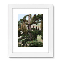 Closeup Picture A Pine Tree Framed Fine Art Print 24X32 / White Wall Decor