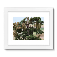 Closeup Picture A Pine Tree Framed Fine Art Print 32X24 / White Wall Decor