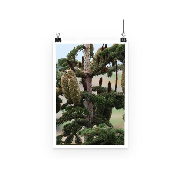 Closeup Picture A Pine Tree Poster A3 Wall Decor