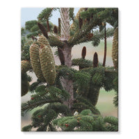 Closeup Picture A Pine Tree Stretched Eco-Canvas 11X14 Wall Decor