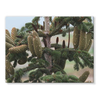 Closeup Picture A Pine Tree Stretched Eco-Canvas 24X18 Wall Decor