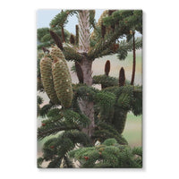 Closeup Picture A Pine Tree Stretched Eco-Canvas 24X36 Wall Decor