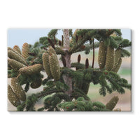 Closeup Picture A Pine Tree Stretched Eco-Canvas 30X20 Wall Decor