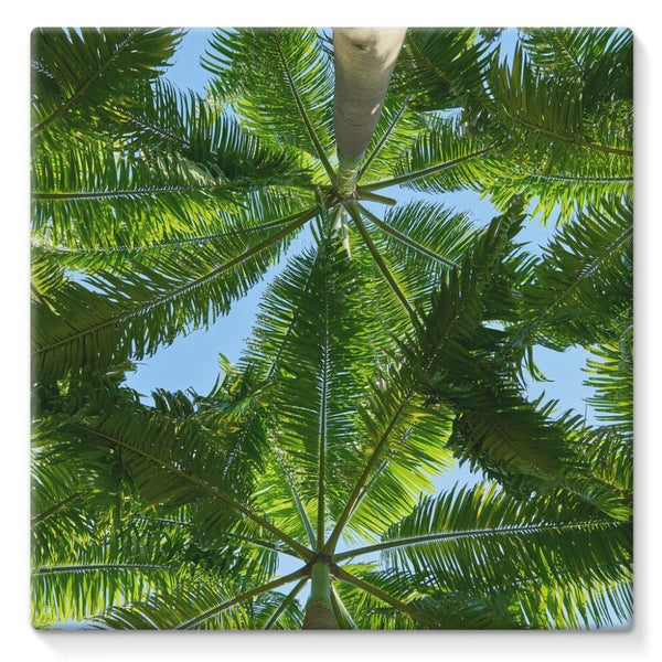 Coconut Trees Leaves Pattern Stretched Canvas 10X10 Wall Decor