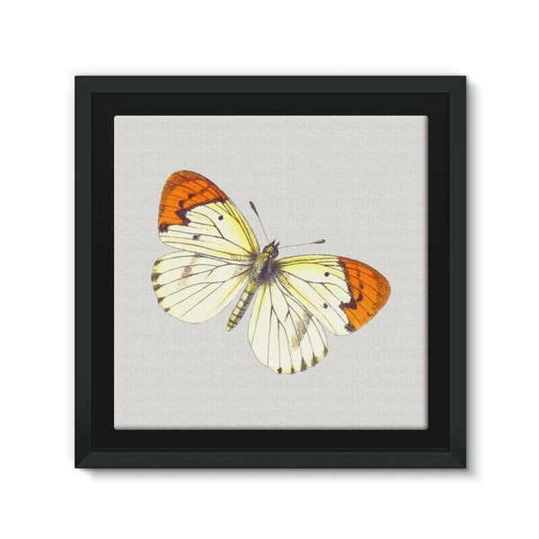 Cream Orange Butterfly Framed Canvas 12X12 Wall Decor