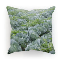 Crops Of Cabbage Cushion Canvas / 18X18 Homeware