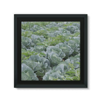 Crops Of Cabbage Framed Canvas 12X12 Wall Decor