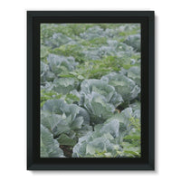 Crops Of Cabbage Framed Canvas 12X16 Wall Decor