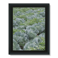 Crops Of Cabbage Framed Canvas 18X24 Wall Decor