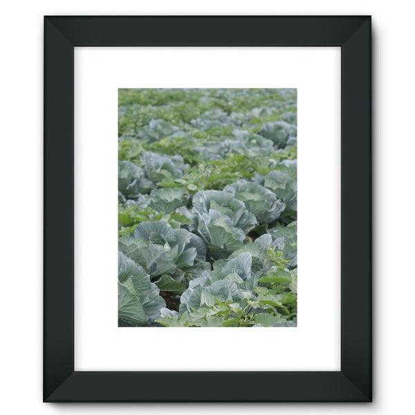 Crops Of Cabbage Framed Fine Art Print 12X16 / Black Wall Decor