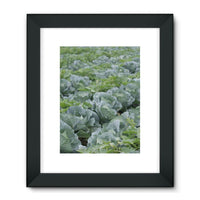 Crops Of Cabbage Framed Fine Art Print 18X24 / Black Wall Decor