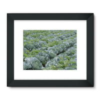 Crops Of Cabbage Framed Fine Art Print 24X18 / Black Wall Decor