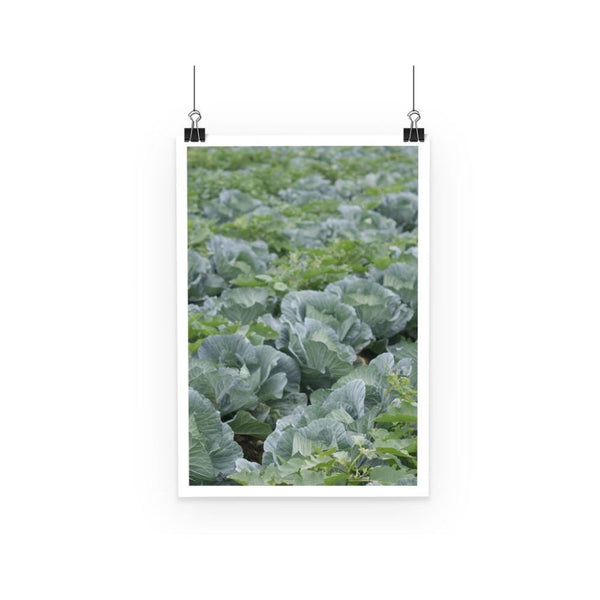 Crops Of Cabbage Poster A3 Wall Decor