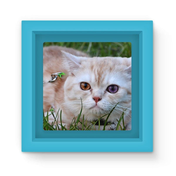 Cute Cat In Yard Closeup Magnet Frame Light Blue Homeware