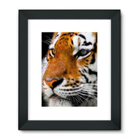 Cute Close-Up Picture Tiger Framed Fine Art Print 18X24 / Black Wall Decor