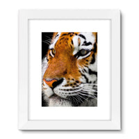 Cute Close-Up Picture Tiger Framed Fine Art Print 24X32 / White Wall Decor