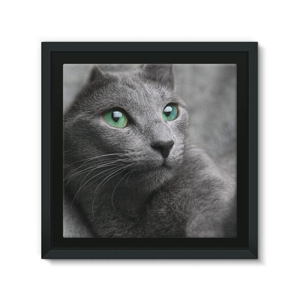 Cute Grey Cat Framed Eco-Canvas 10X10 Wall Decor
