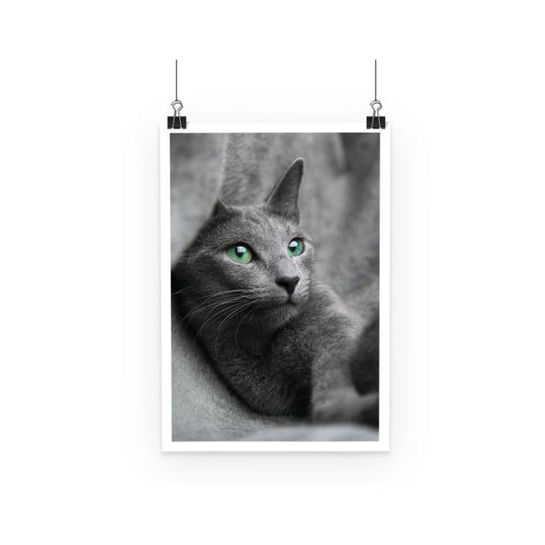 Cute Grey Cat Poster A3 Wall Decor