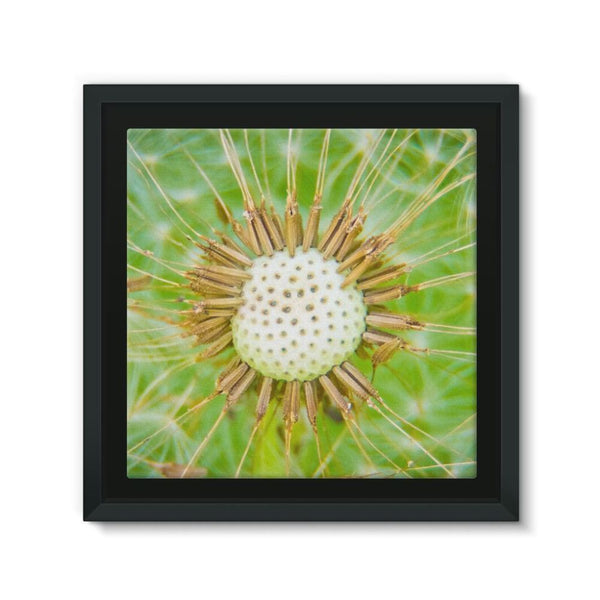 Dandelion Flower Framed Eco-Canvas 10X10 Wall Decor