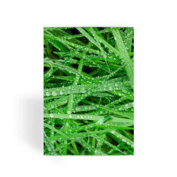 Dew On Blades Of Lush Grass Greeting Card 1 Prints