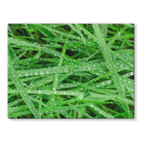 Dew On Blades Of Lush Grass Stretched Canvas 24X18 Wall Decor