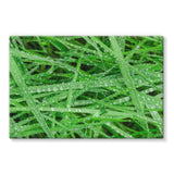 Dew On Blades Of Lush Grass Stretched Canvas 30X20 Wall Decor