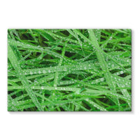 Dew On Blades Of Lush Grass Stretched Canvas 36X24 Wall Decor