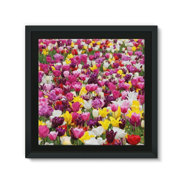 Different Tulips In Holland Framed Canvas 12X12 Wall Decor