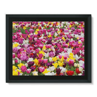 Different Tulips In Holland Framed Canvas 16X12 Wall Decor