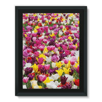 Different Tulips In Holland Framed Canvas 18X24 Wall Decor